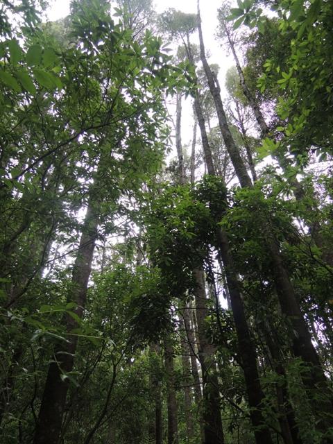 Ada hutan di tengah Hamilton City! Sejuk, indah. Semacam paru-paru kota
