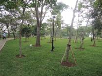 Rindang dengan banyak pepohonan