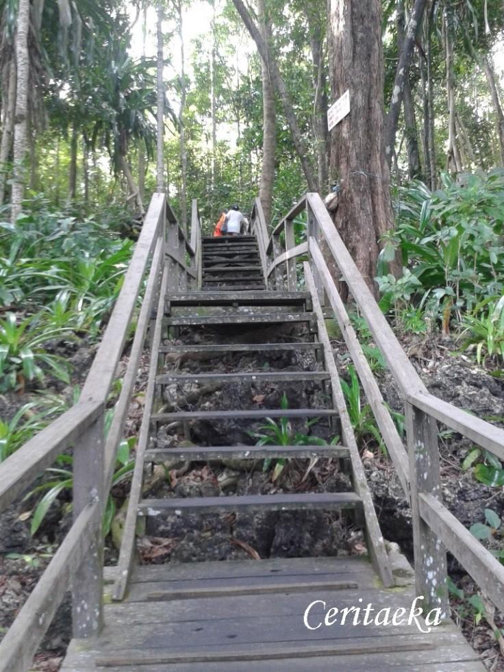 Oke, perkara naik tangga sih nggak seberapa, asal bisa lihat ubur-ubur. Tapi ternyata naik tangganya PR banget! Walau nggak lama tapi lumayan bikin jantung saya yang jarang olahraga ini sedikit ngos-ngosan. Hihihi.