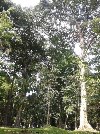 Kebun Raya Bogor 3