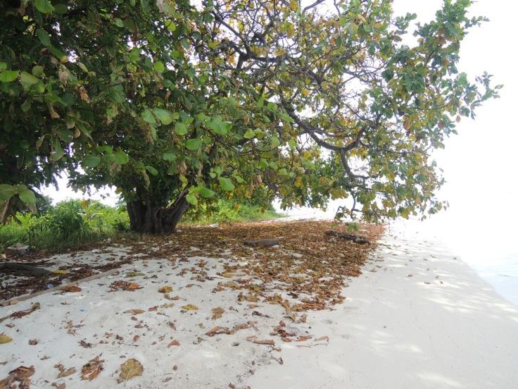 Daun-daun oleh gugur pada musimnya, tapi cintaku padamu tidak akan pernah padam. #GombalPantai Hahaha