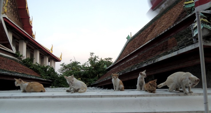Wat Pho Bangkok 12