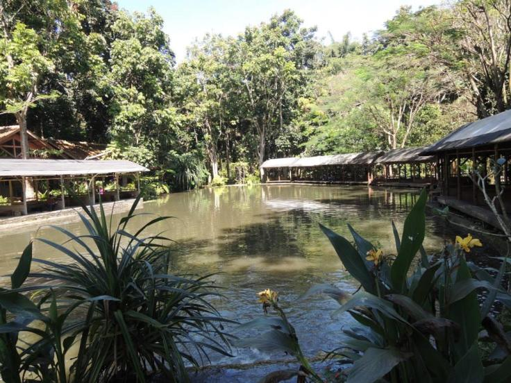 Not only lake, Imah Seniman is a home for the fishers.