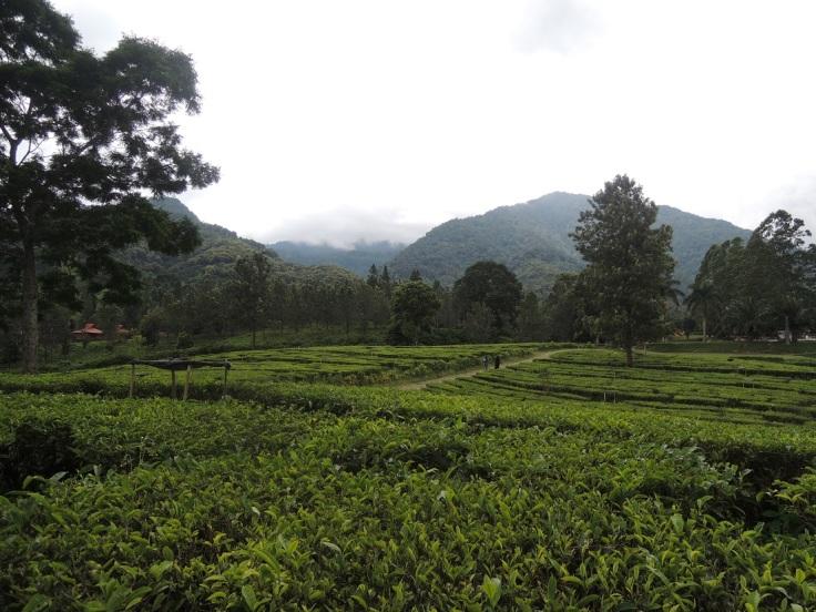 Puncak dan kebun teh-nya yang selalu ngangenin. Wisata murah meriah yang bikin hati adem! ^_^