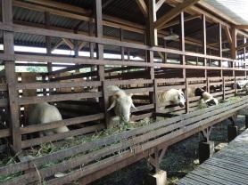 Kuntum Farmfield Bogor 3