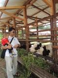 Kuntum Farmfield Bogor 8