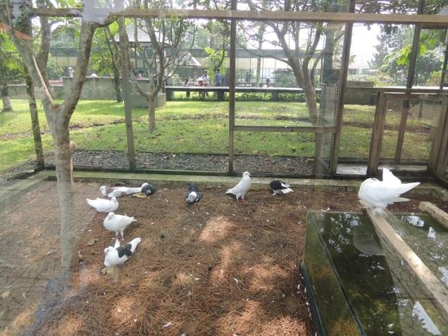 Kuntum Farmfield Bogor 9
