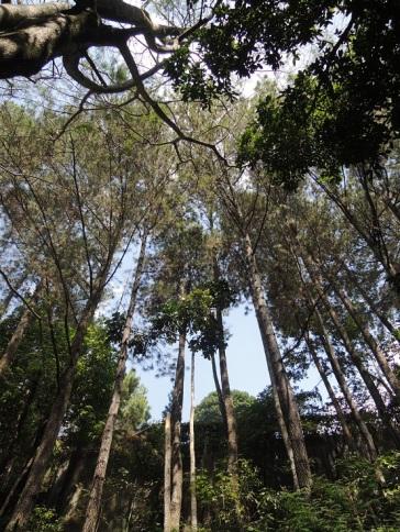 Taman Hutan Raya Juanda 1
