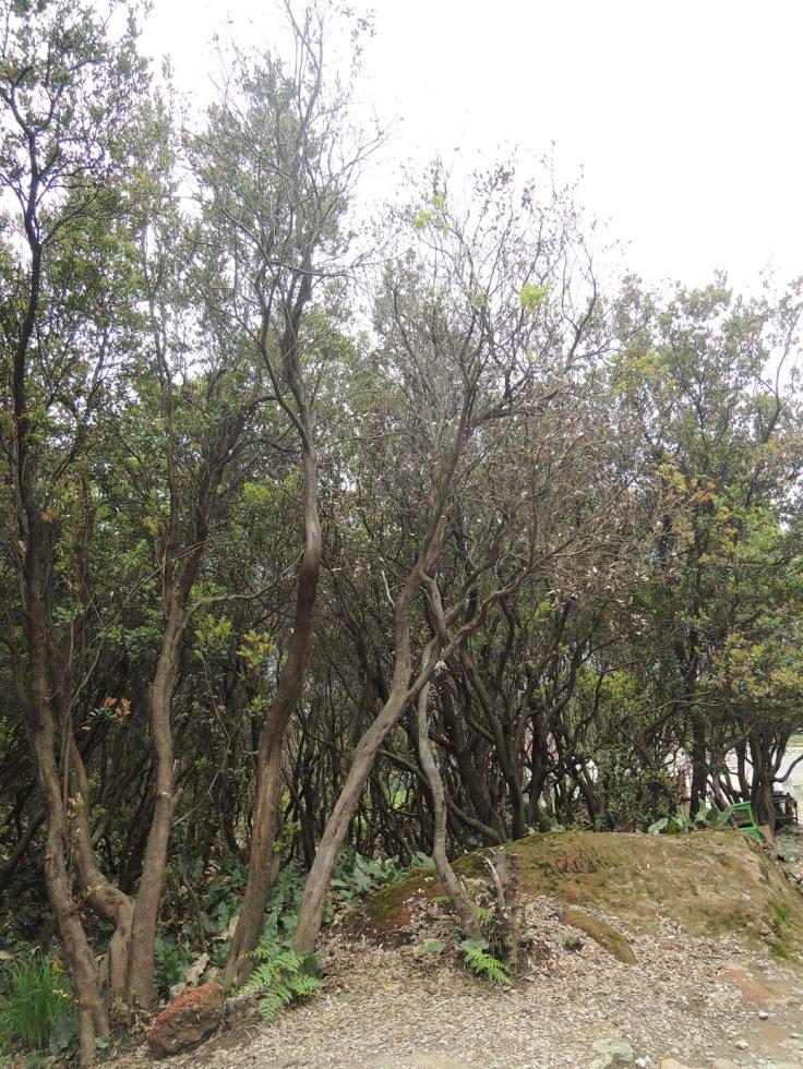 Gunung Papandayan a