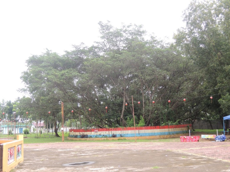 Pohon Cinta Pulau Kamaro