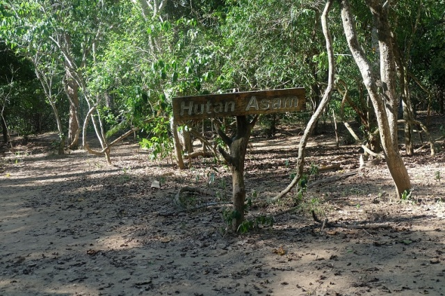 Pulau Komodo Island 9