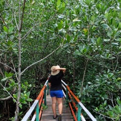hutan-mangrove-pintu-kota-bitung-2