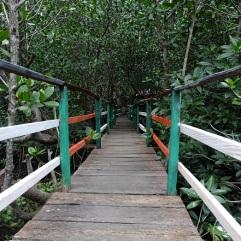 hutan-mangrove-pintu-kota-bitung