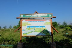 Ekowisata Mangrove Karangsong 4