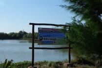 Ekowisata Mangrove Karangsong 5