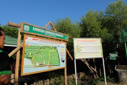 Ekowisata Mangrove Karangsong 8