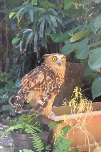 Burung-burung cantik di Gembira Loka Zoo