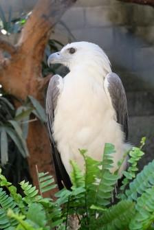Gembira Loka Zoo 3
