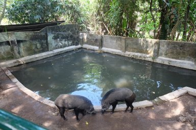 Koleksi binatang di Gembira Loka Zoo